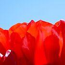 Red Petal Sun by Sophia Covington