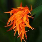 Orchid Flames by Sophia Covington