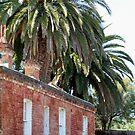 Palms Over Brick Cottage by Sophia Covington