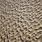 Sand Patterns by Sophia Covington