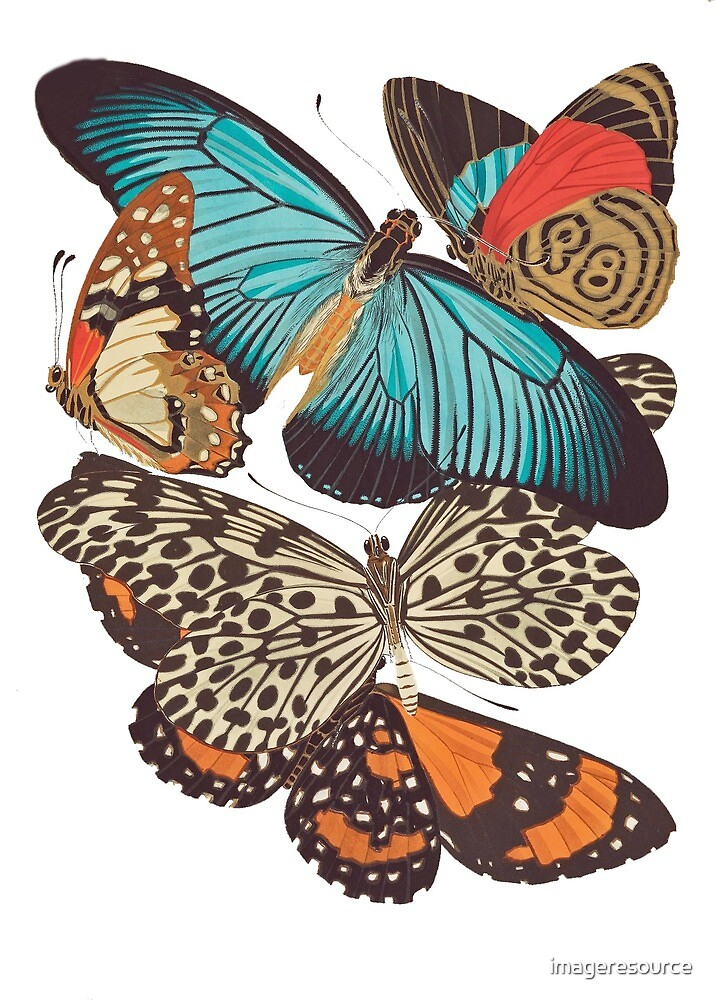FF - Butterfly-4 by imageresource