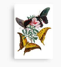FF - Butterfly-3 Canvas Print