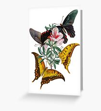 FF - Butterfly-3 Greeting Card