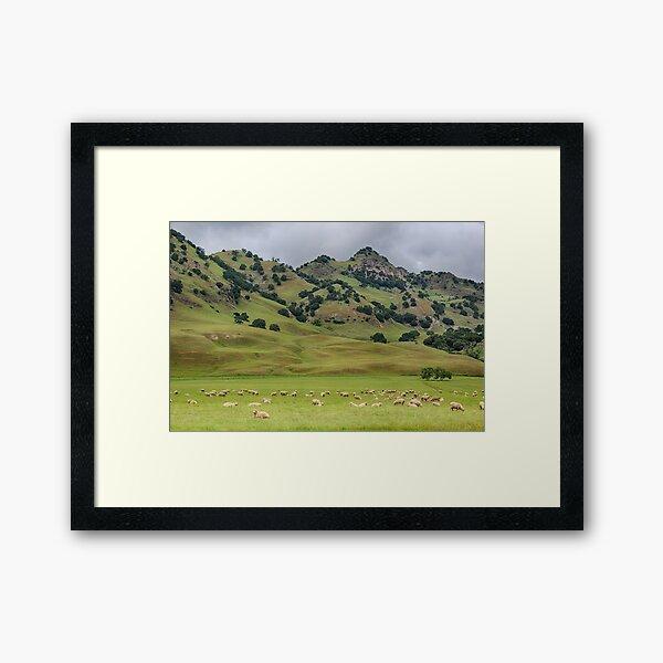 Sutter Buttes - Spring 2016 Framed Art Print