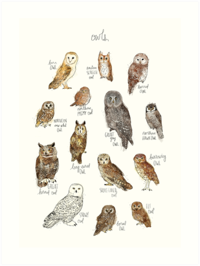 Owls by Amy Hamilton