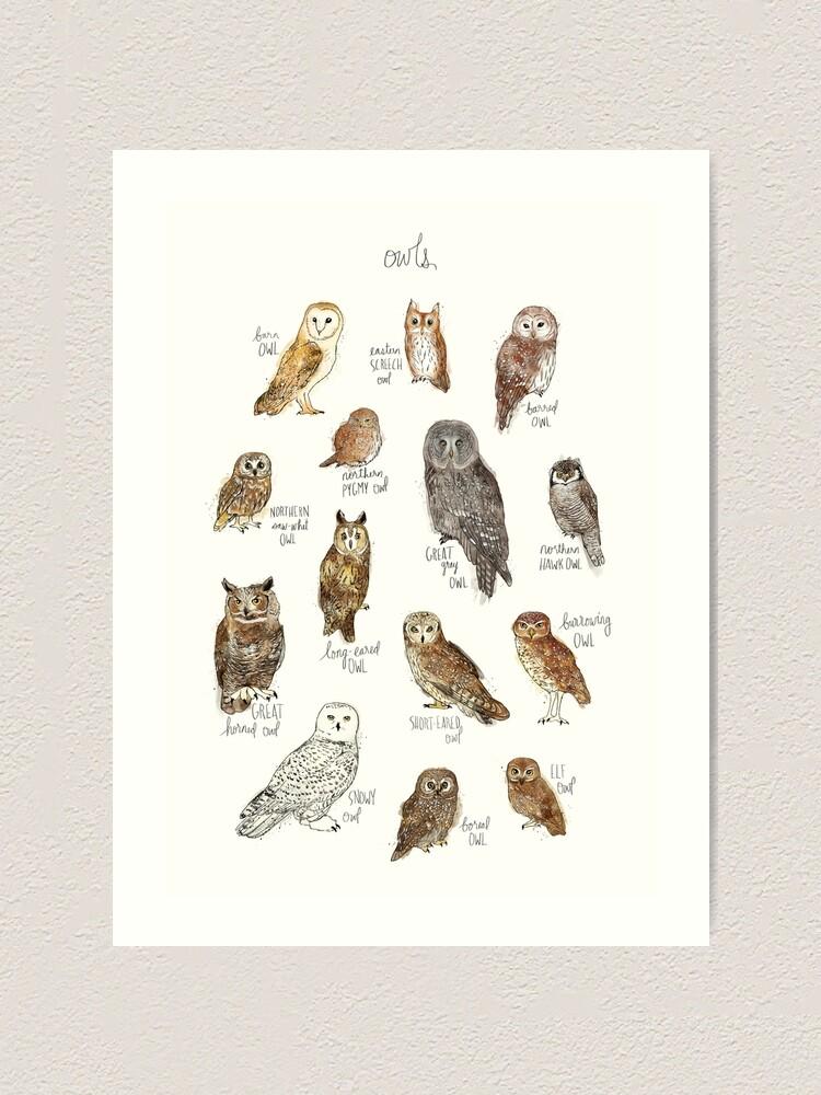 Alternate view of Owls Art Print
