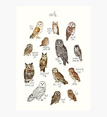 Owls Photographic Print