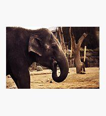 elephant, asia elephant Photographic Print