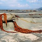Seaweed Drape - Great Ocean Road by Sophia Covington