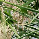 Soft Green Reeds by Sophia Covington