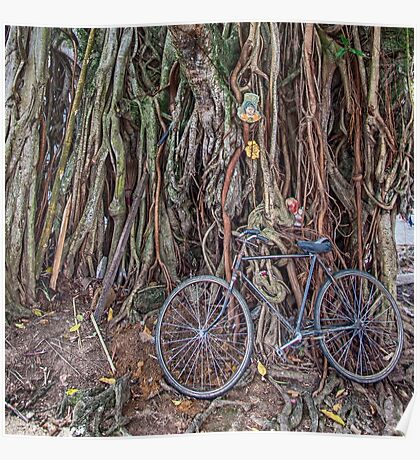Bicycle and Tree Poster