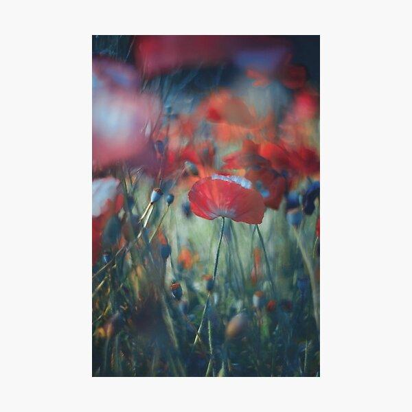 loves garden Photographic Print