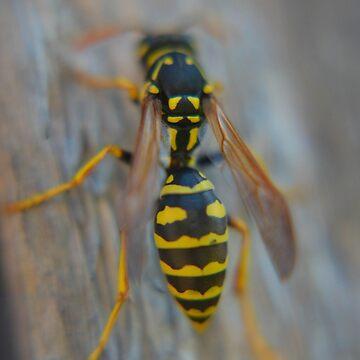 Lucas's Bee by DaniMorin519