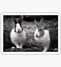 Bunny Buddies Sticker