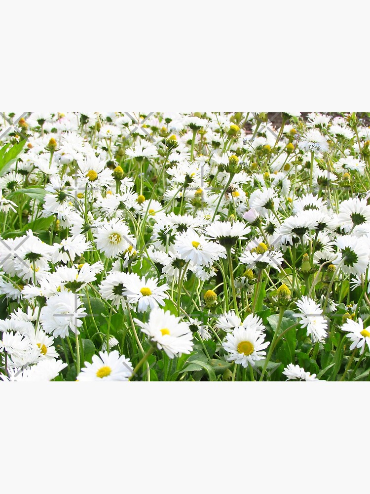 Ask me about my plants. Chamomile field Spring time by CWartDesign