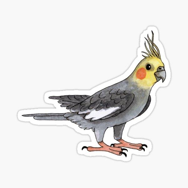 Cockatiel bird Sticker