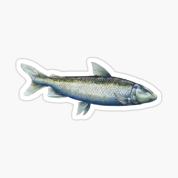 Houting - Fishy business Sticker
