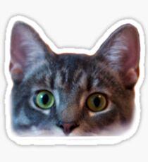 cat peeking Sticker