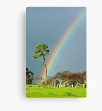serious rainbow Canvas Print