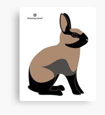 rabbit, tortoiseshell colour Canvas Print