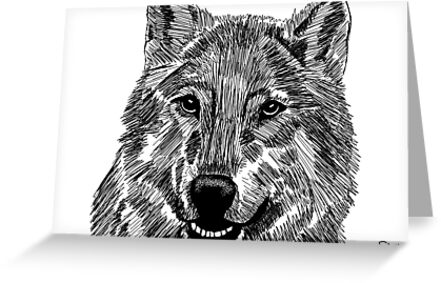 Canis lupus by Shaylah Jensen