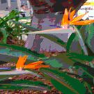 Birds Of Paradise by C J Lewis