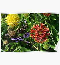 Beautiful colorful flowers in the garden. Poster
