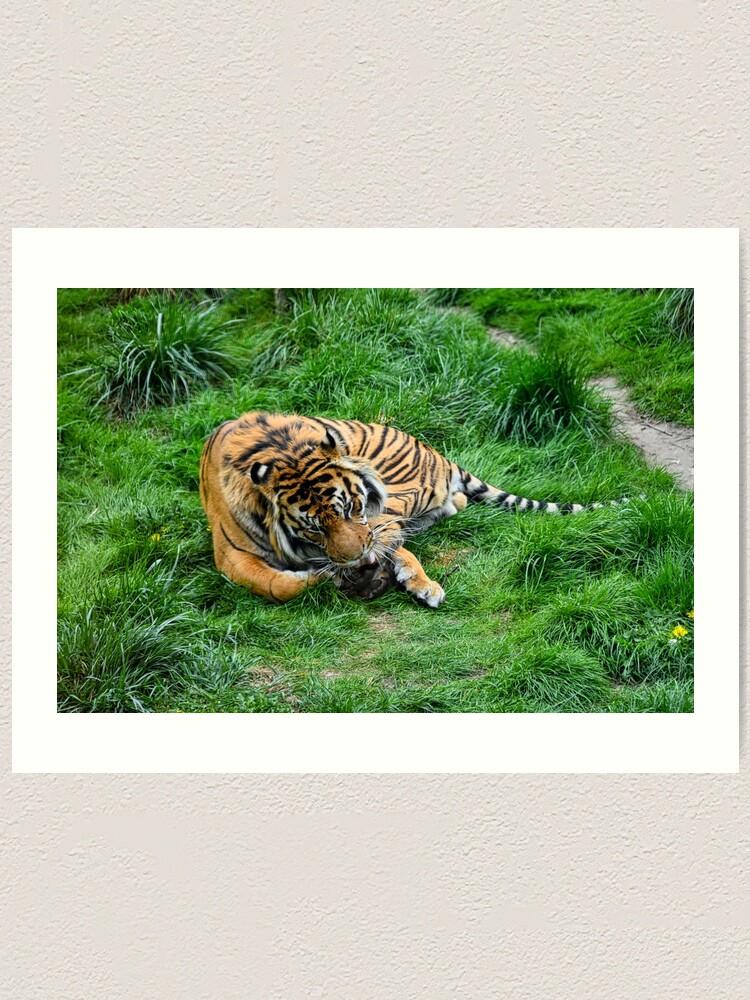 Alternate view of Tiger in grass Art Print