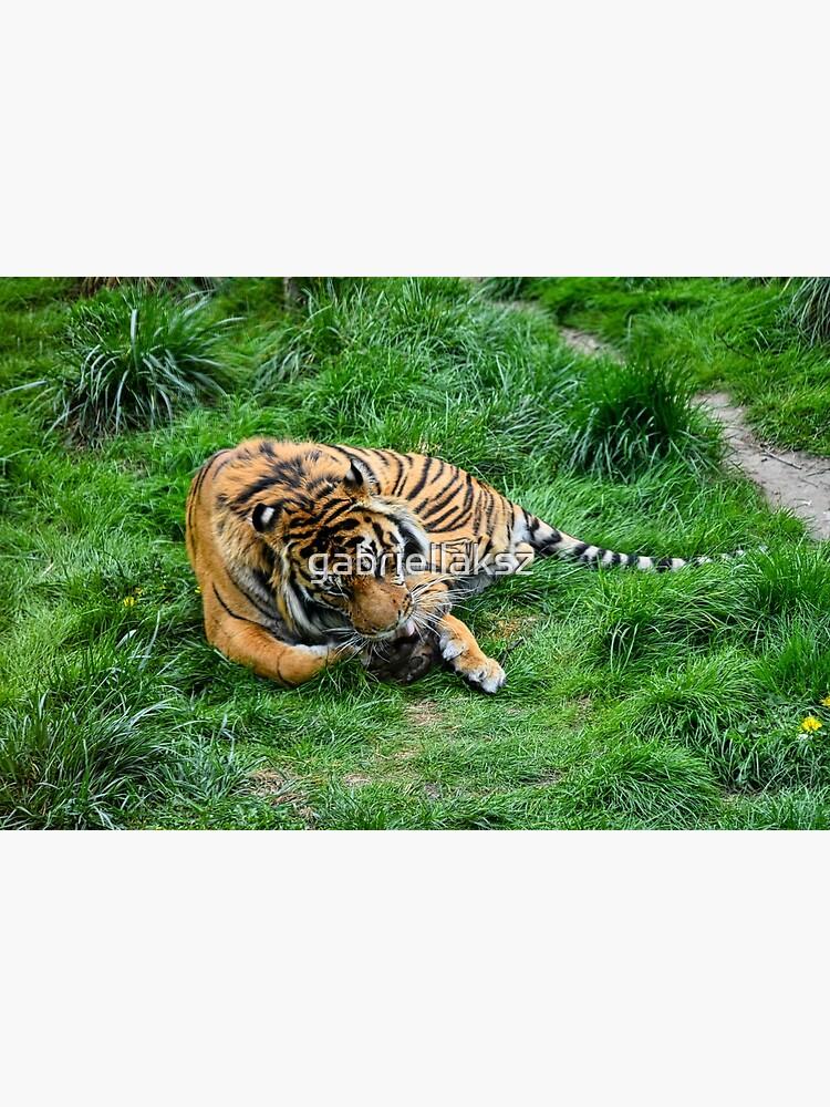Tiger in grass by gabriellaksz