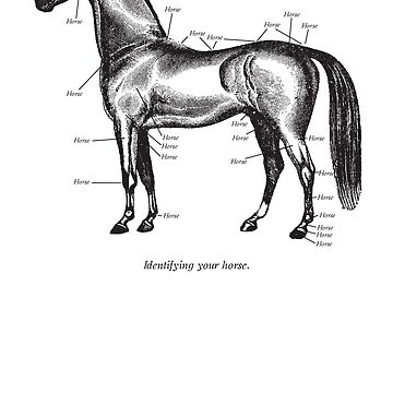 Identifying your horse by pauk