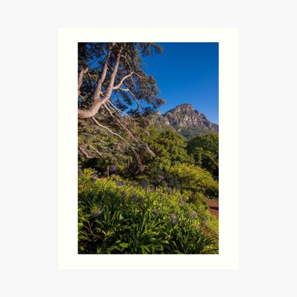 View from Kirstenbosch, South Africa Art Print