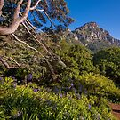 View from Kirstenbosch, South Africa by Erik Schlogl