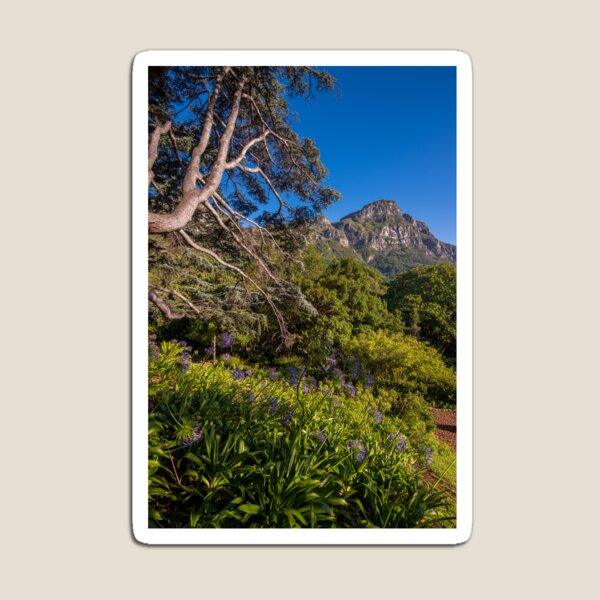View from Kirstenbosch, South Africa Magnet