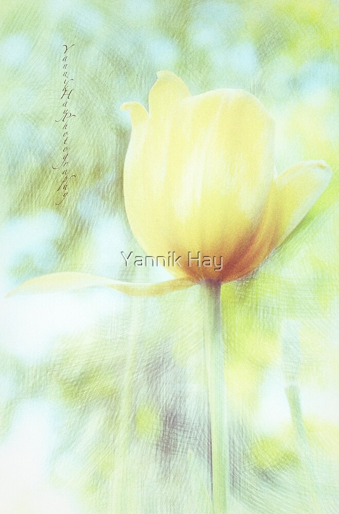 Yellow Tulip For Love by Yannik Hay