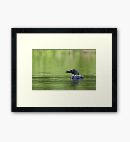 Cool and green and shady - Common loon Framed Print