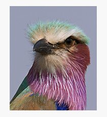 Lilac Breasted Roller Close Up  Photographic Print