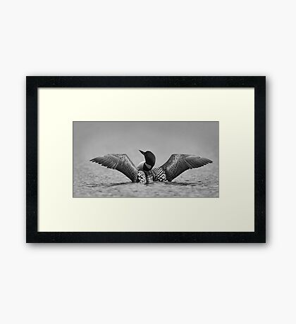 Common loon in black and white Framed Print