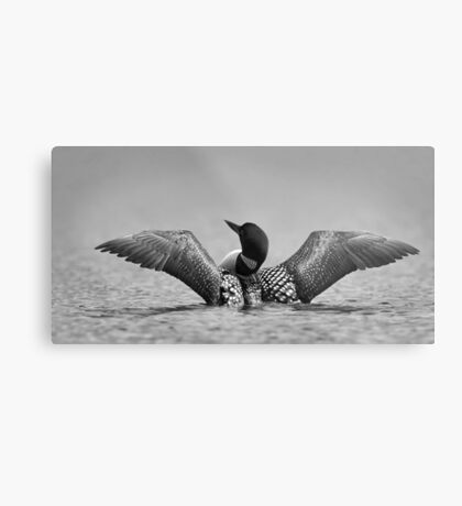 Common loon in black and white Metal Print
