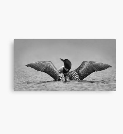 Common loon in black and white Canvas Print