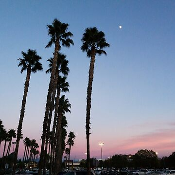 California Sunset by madewithtubo
