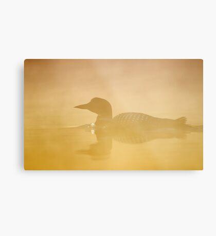 In a golden mist - Common loon Metal Print