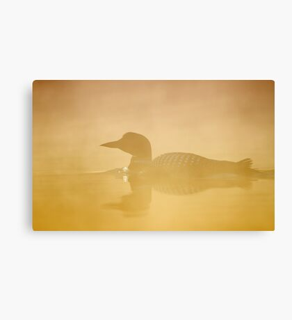 In a golden mist - Common loon Canvas Print