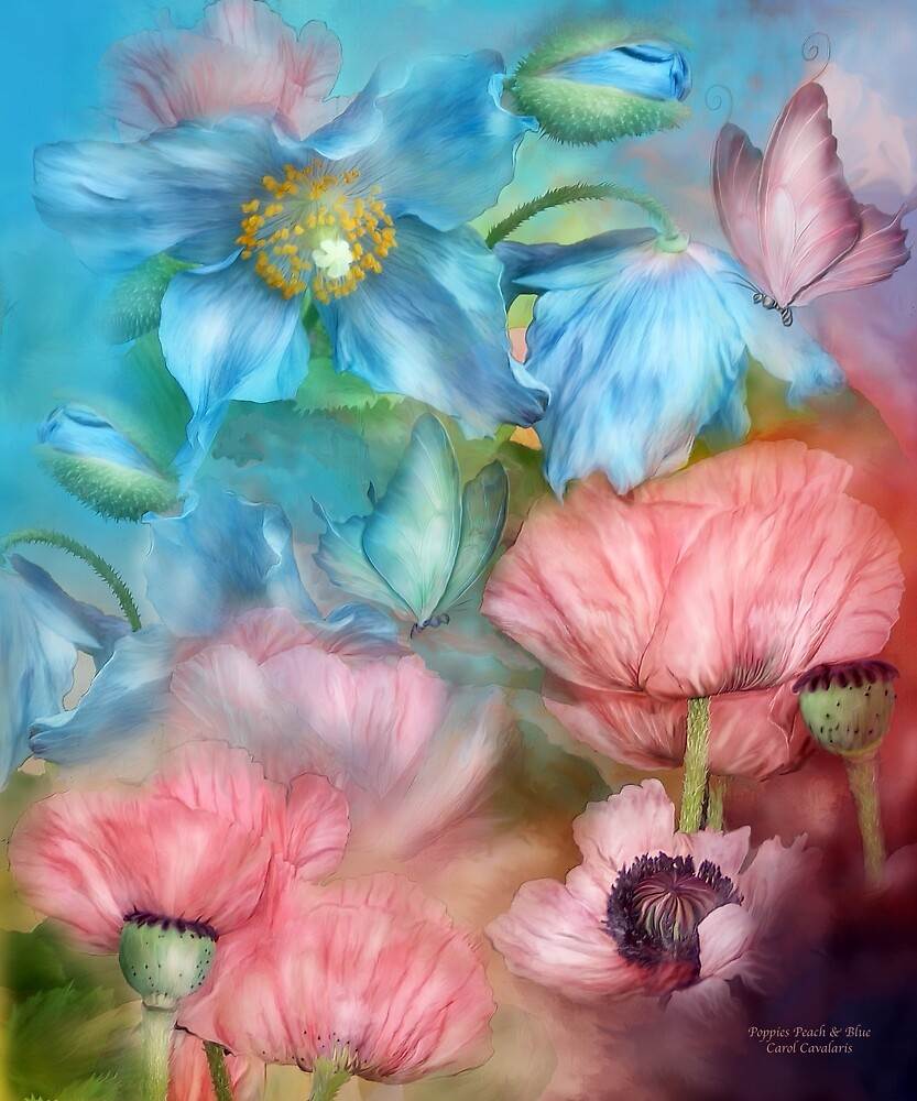 Poppies Peach & Blue by Carol  Cavalaris