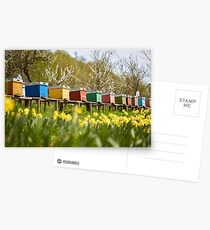 Bee hives in the field and orchard Postcards