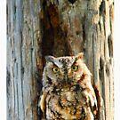 Screech-Owl by glink