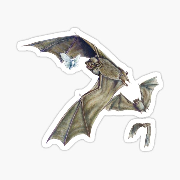 Savi's Pipistrelle - itty bitty bats flying around Sticker