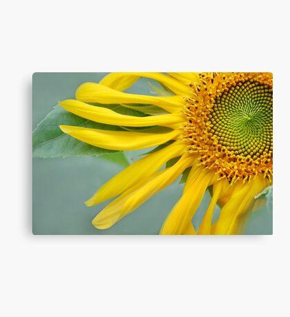 Floral Pinwheel Canvas Print