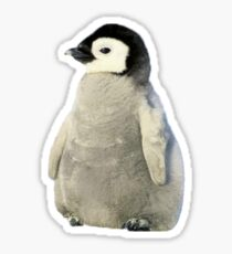 baby penguin Sticker