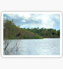 Cormorant at Lake Alice Sticker