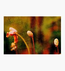 Floral metamorphosis Photographic Print